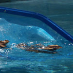 How to Clear Up Cloudy Pool Water after a Rainstorm In Granite Bay CA